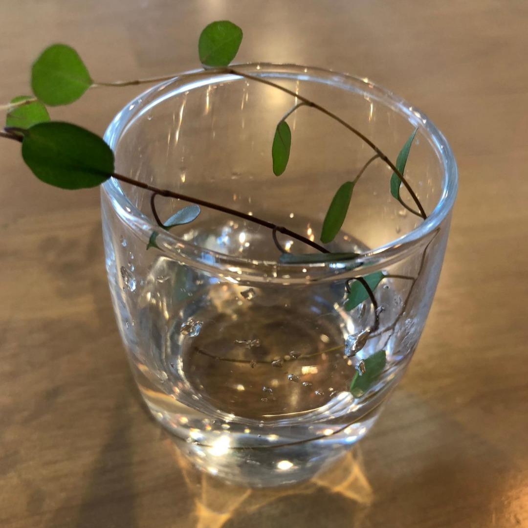 ワイヤープランツの水耕栽培2