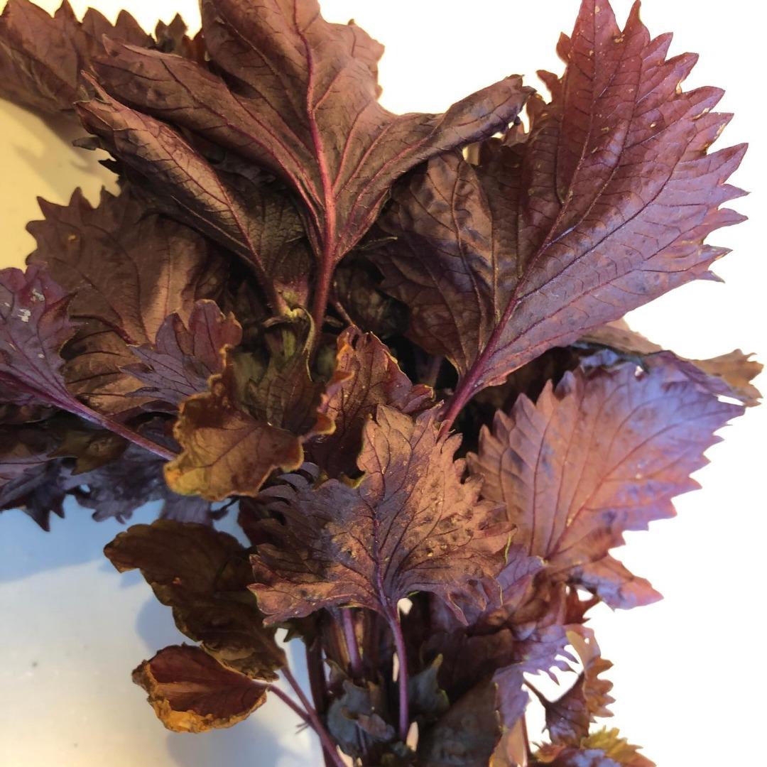赤紫蘇ジュースに使う赤紫蘇
