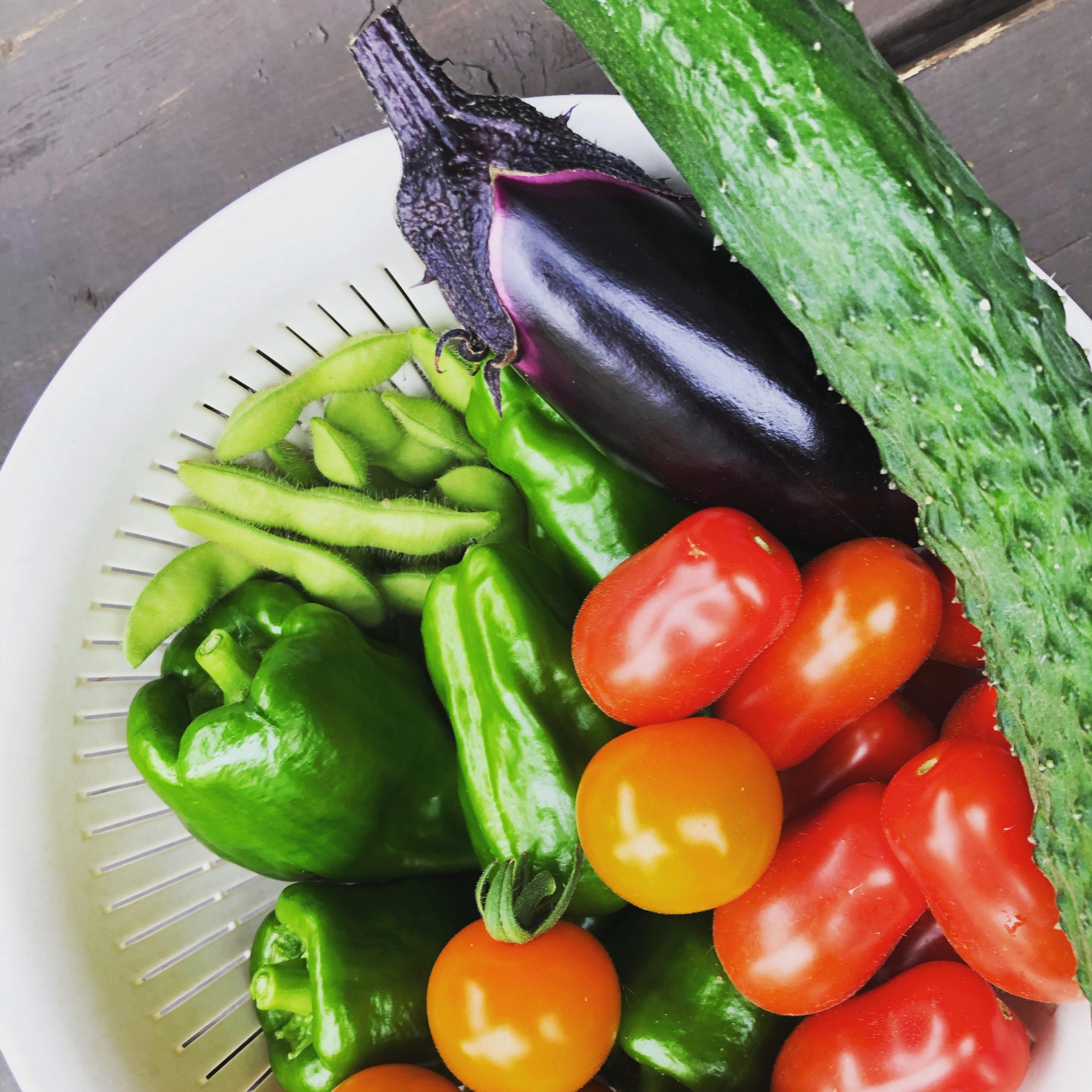 北海道の家庭菜園での収穫