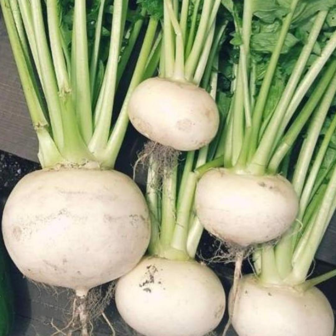 北海道の秋まき野菜