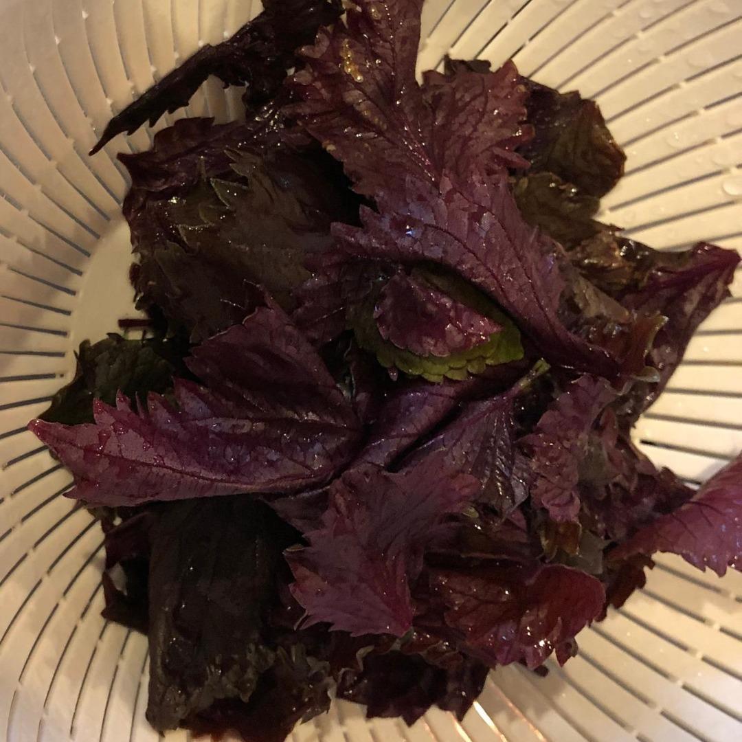 赤紫蘇ジュースに使う、葉