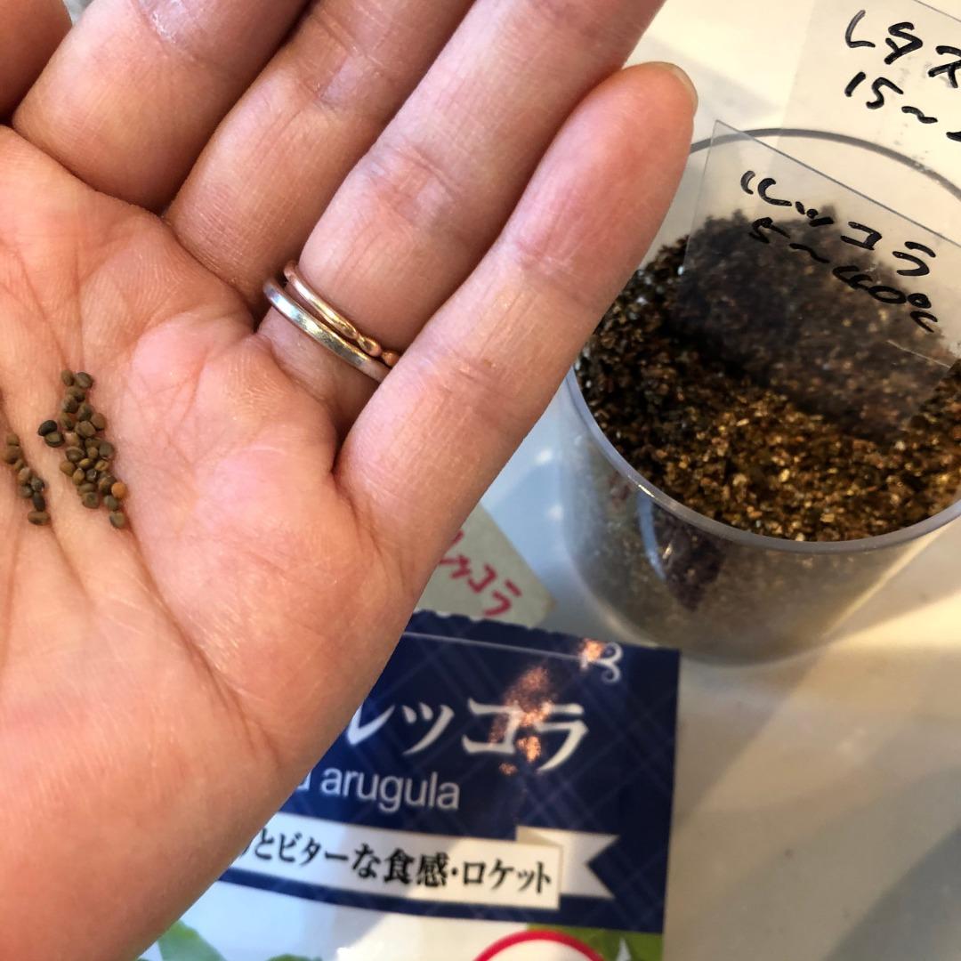 ルッコラ水耕栽培種まき方法