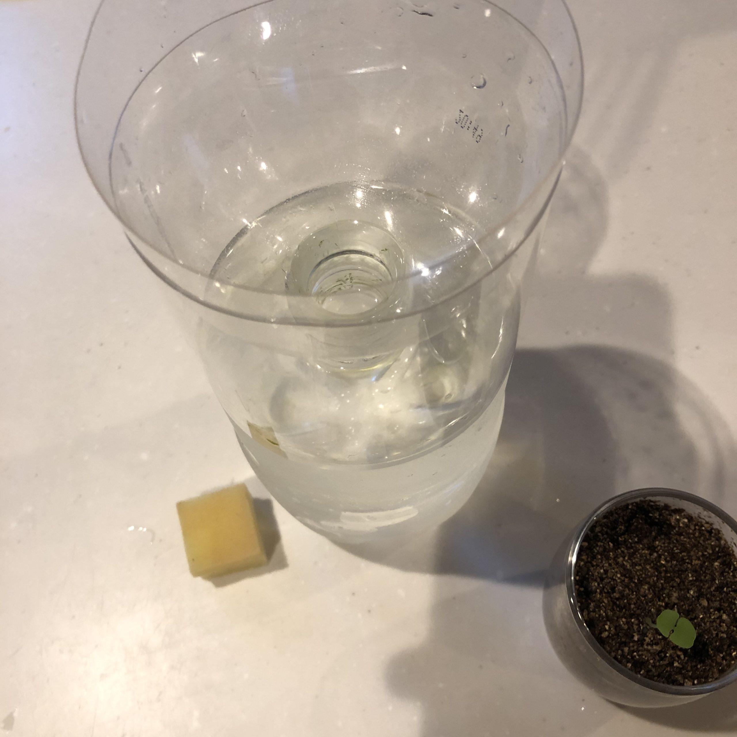 バジルの水耕栽培容器