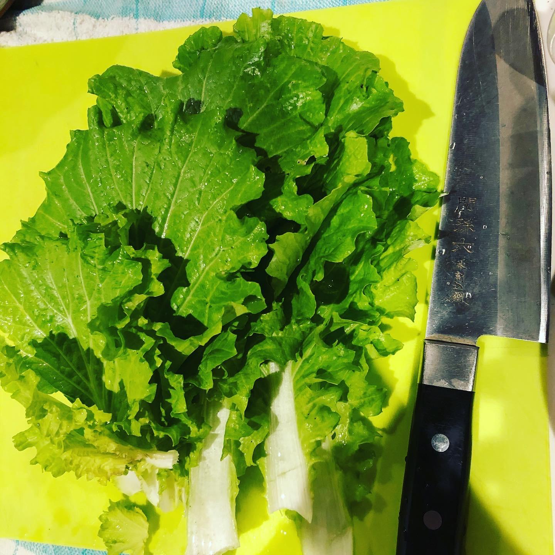 山東菜の調理法