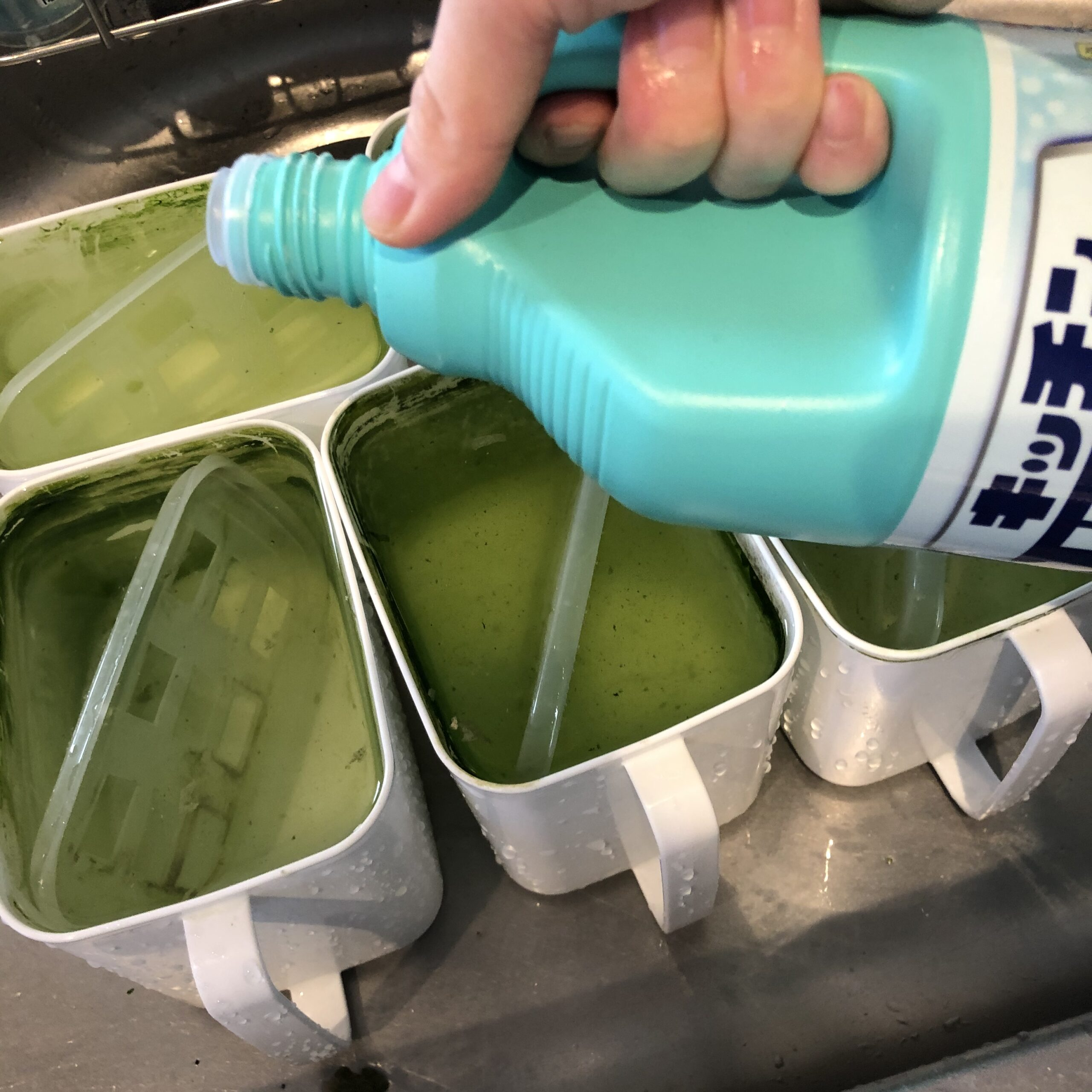 水耕栽培容器をハイターで浸け置き