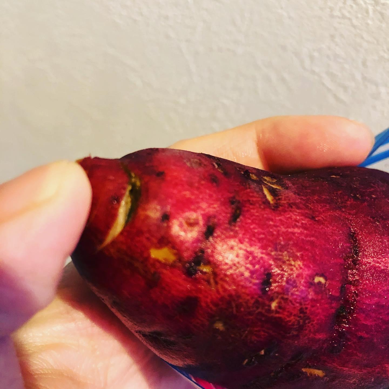 種芋が腐る