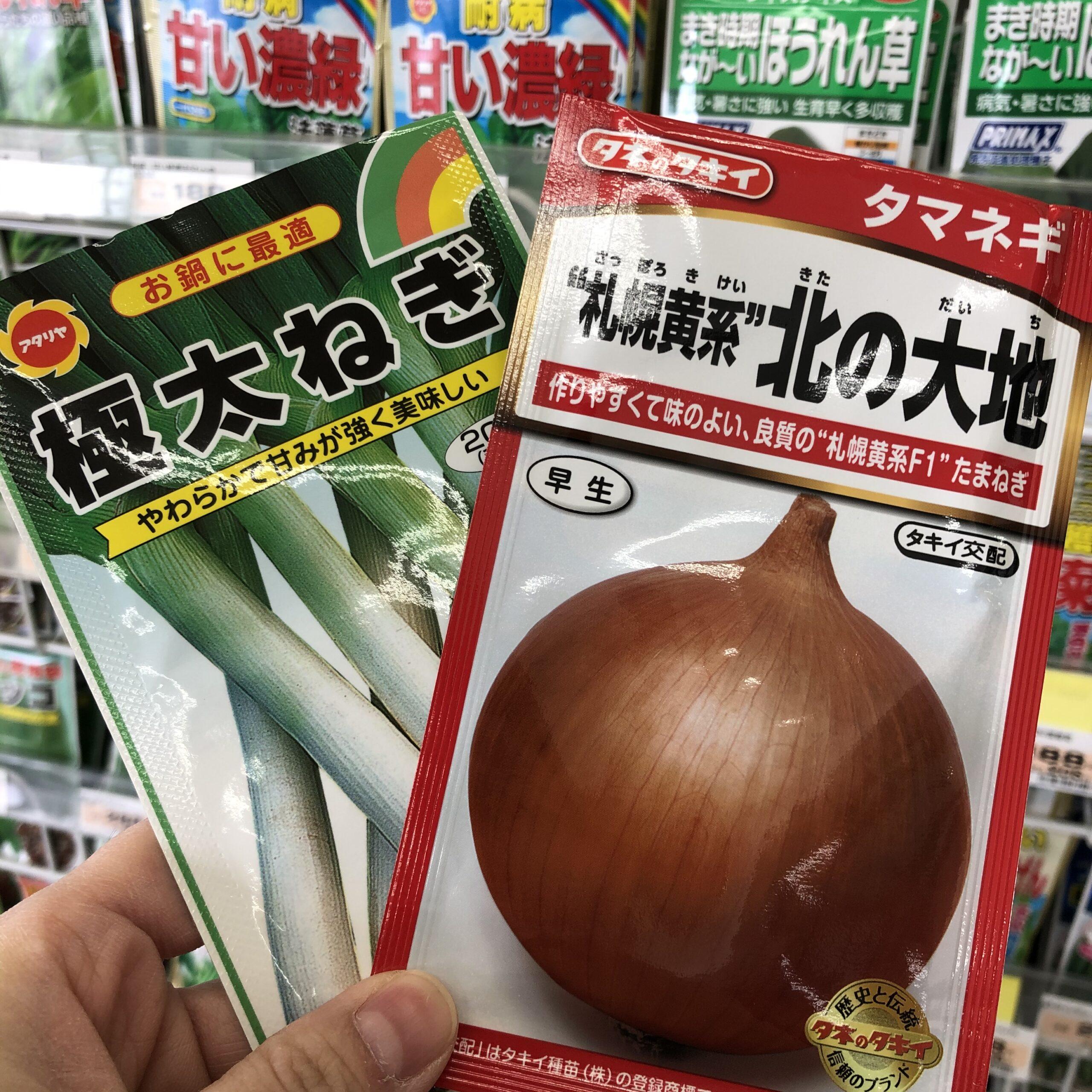 北海道で玉ねぎを種から育苗