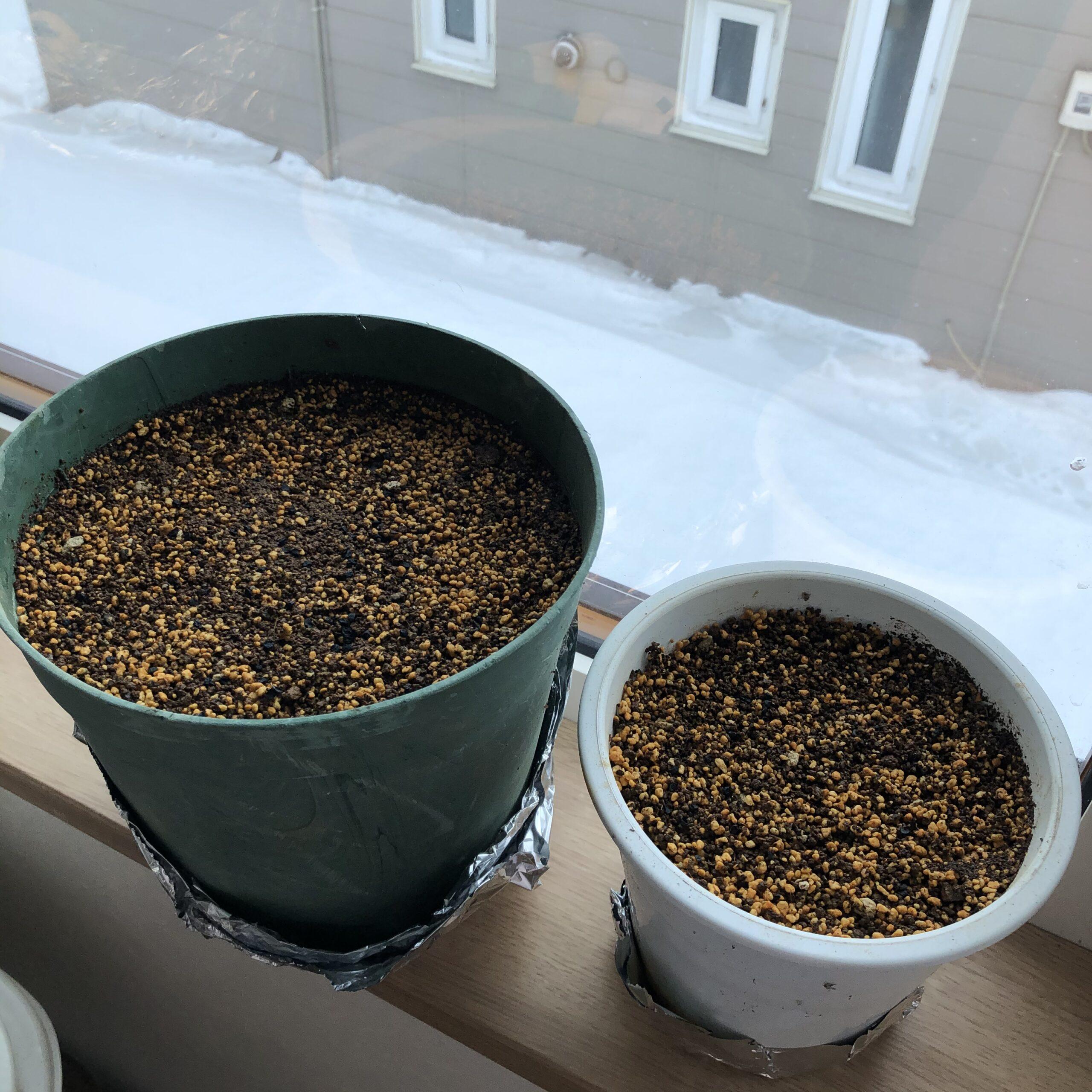 玉ねぎ、長ネギ、窓際育苗