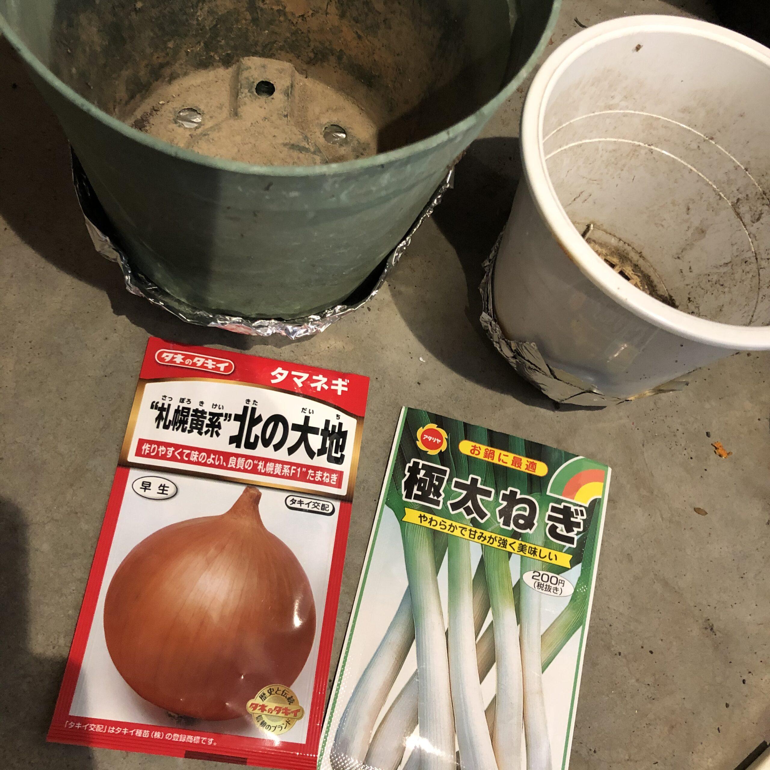 玉ねぎとネギの育苗